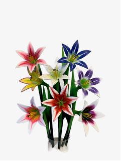Wooden Star Gazer Lily